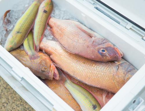 魚おろしサービス